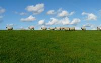 sheep-57706_640